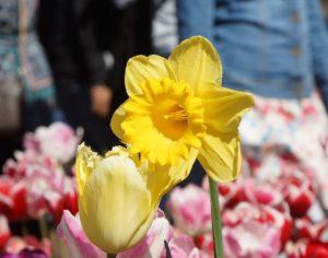 #Floriade2016 spring celebration at CanberraDSC09058