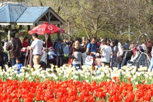 #Floriade2016 spring celebration at CanberraDSC09259