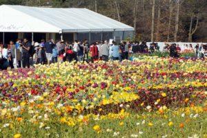 #Floriade2016 spring celebration at CanberraDSC09261