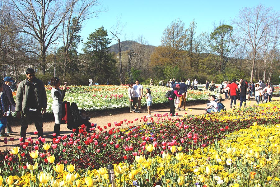#Floriade2016 spring celebration at CanberraDSC09277