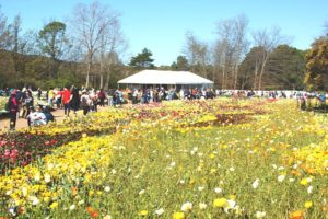 #Floriade2016 spring celebration at CanberraDSC09285