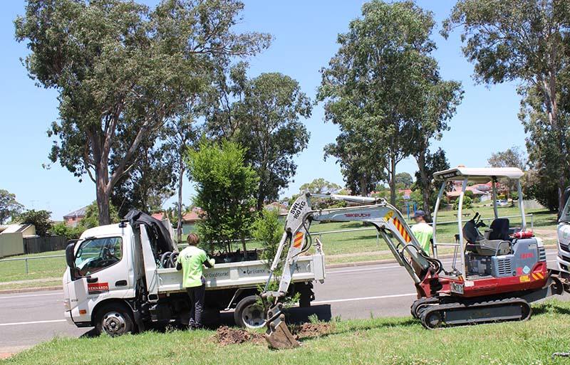 Blacktown Council Tree Plantation - Katuwal.com